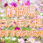 静岡県 秋桜コスモス畑・名所・穴場 おすすめ人気スポット 2018年の見ごろは?
