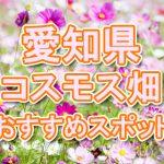 愛知県 秋桜コスモス畑・名所・穴場 おすすめ人気スポット 2018年の見ごろは?