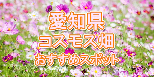コスモス 愛知県