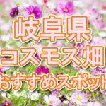 岐阜県 秋桜コスモス畑・名所・穴場 おすすめ人気スポット 2018年の見ごろは?