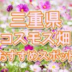 三重県 秋桜コスモス畑・名所・穴場 おすすめ人気スポット 2018年の見ごろは?