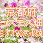 京都府(関西)コスモス畑・名所・穴場 おすすめ人気スポット 2018年の見ごろは?