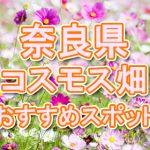 奈良県(関西)コスモス畑・名所・穴場 おすすめ人気スポット 2018年の見ごろは?