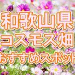 和歌山県 秋桜コスモス畑・名所・穴場 おすすめ人気スポット 2018年の見ごろは?