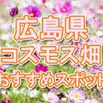 広島県 コスモス畑・名所・穴場 おすすめ人気スポット 2018年の見ごろは?