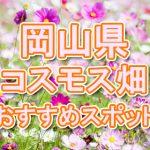 岡山県 コスモス畑・名所・穴場 おすすめ人気スポット 2018年の見ごろは?