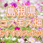 島根県 コスモス畑・名所・穴場 おすすめ人気スポット 2018年の見ごろは?