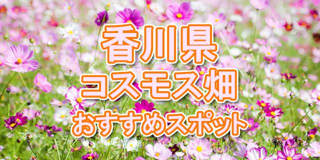 コスモス畑 香川県