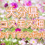 大分県(九州)コスモス畑・名所・穴場 おすすめ人気スポット 2018年の見ごろは?