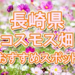 長崎県(九州)コスモス畑・名所・穴場 おすすめ人気スポット 2018年の見ごろは?