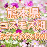 熊本県(九州)コスモス畑・名所・穴場 おすすめ人気スポット 2018年の見ごろは?