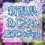 新潟県のあじさい鑑賞スポット・名所・穴場 2019年の見ごろ・開花・紫陽花祭り情報