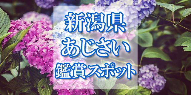 新潟県あじさいスポット