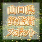 山口県のホタル観賞スポット・名所/穴場 2019 見ごろの時期は?