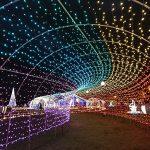 豊崎海浜公園 美らSUNビーチ 光のガーデンイルミネーション